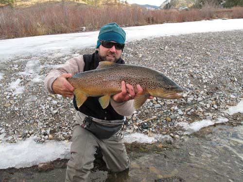 Montana fall brown trout