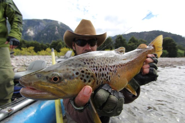 Chile fly fishing brown trout