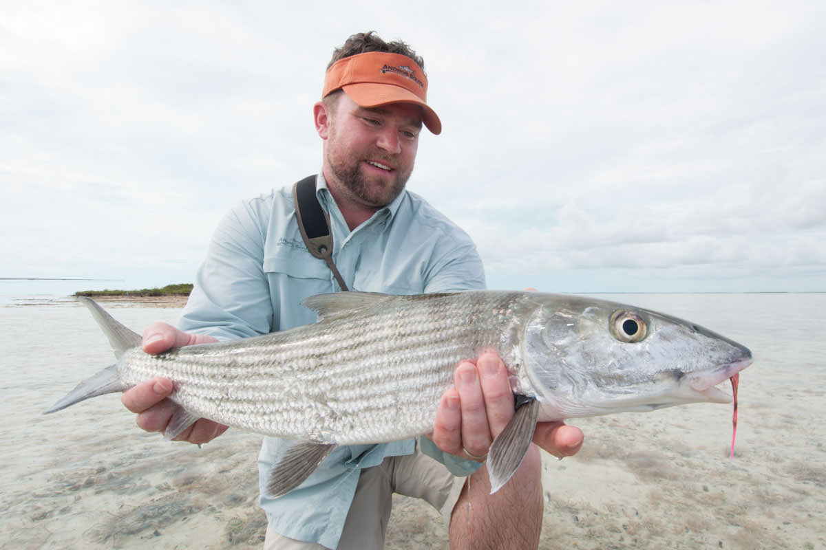 Photos of bonefish in the bahamas montana angler for Fly fishing bahamas