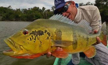 Fly Fishing for Peacock Bass in the Amazon
