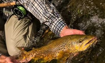 Montana fly fishing packages