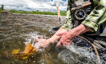 Yellowstone river fly fishing guides trips lodges near for Yellowstone park fishing report