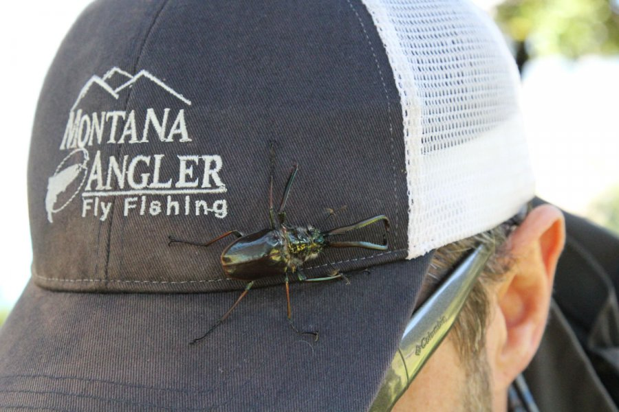 Fly Fishing in Chile: The Cantaria Beetle