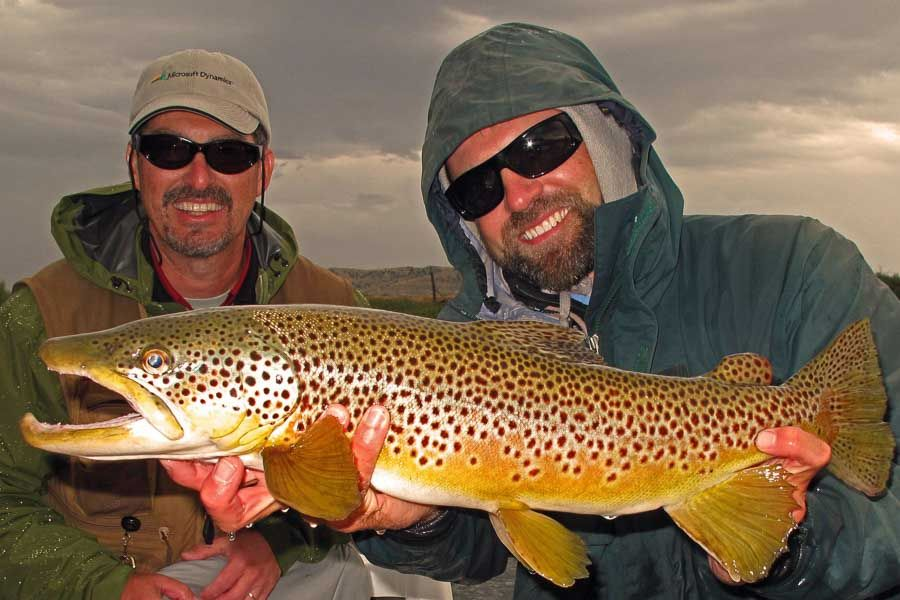 Montana Brown Trout Fishing