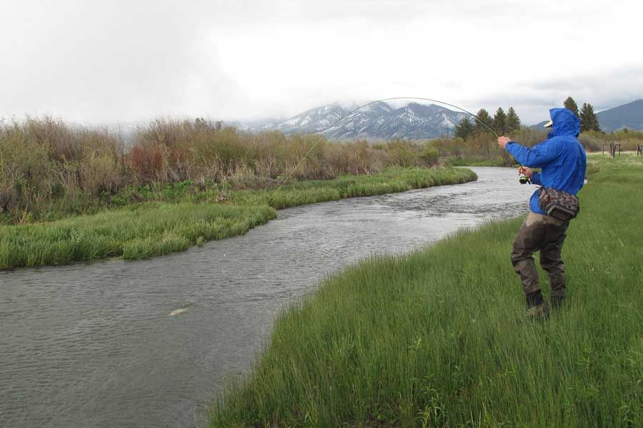fly fishing montana spring creeks in march montana angler