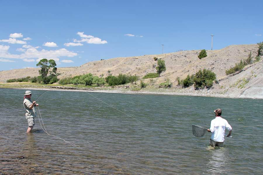 Fly fishing for carp montana angler for Montana fishing trips