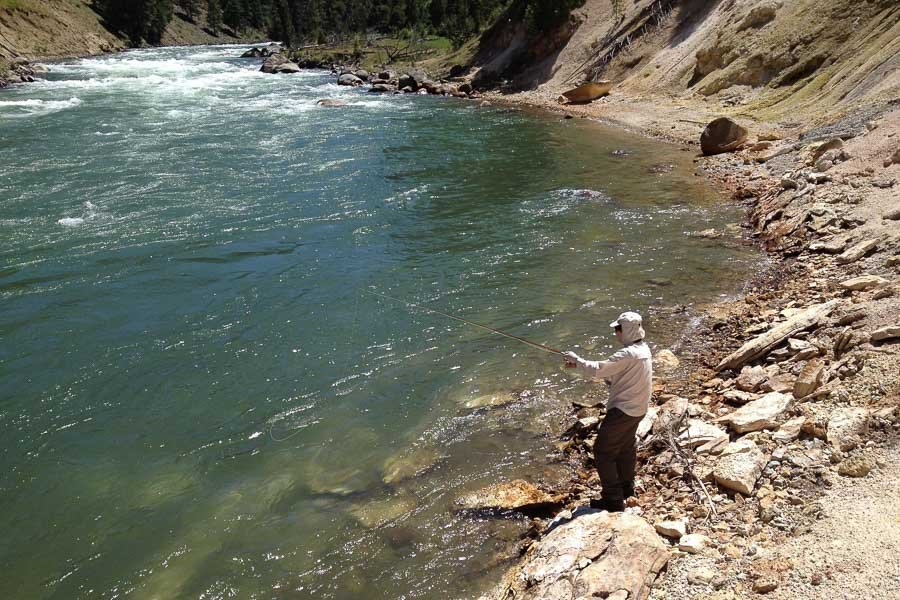 Fighting a Cutthroat in the Yellowstone Backcountry