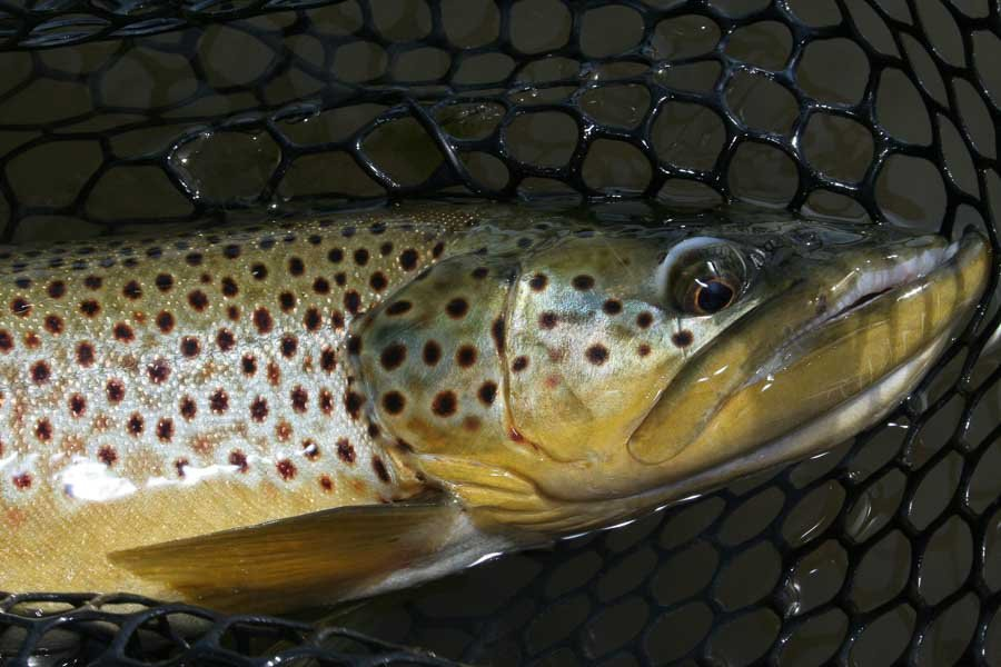 Big Hole River Fly Fishing Guides, Trips & Lodges | Montana