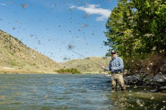 Mother's Day Caddis Hatch Madison River