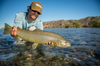 A beautiful Limay River Brown Trout