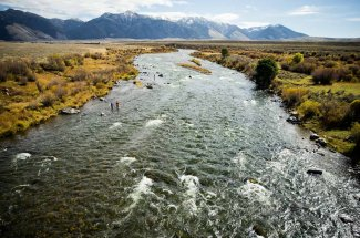 Fly Fishing and wading on the Madison River