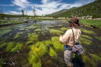 Yellowstone National Park fly fishing