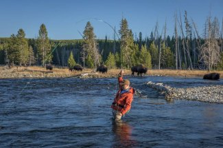Bison crossing and fishing catching on the Firehole River