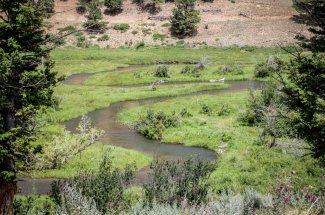 Fishing the North Fork of the MusselShell river
