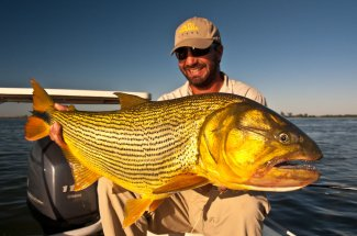 Giant golden dorado