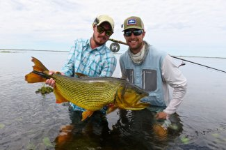 Another hefty golden dorado taken on a fly
