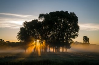 Sunrise through the fog and trees
