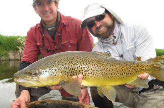 Brown Trout in Montana