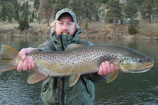 Big and Beautiful - Montana Brown Trout