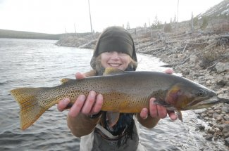 This is big Cutthroat caught in Yellowstone National Park