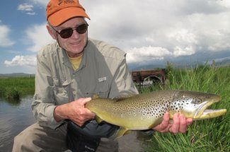 Big brownie taken on a fly