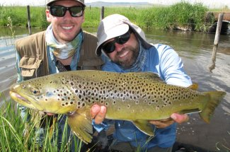 Fly fishing for brown trout on many Montana rivers