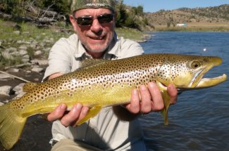 Catching brown trout in the summer time in Montana