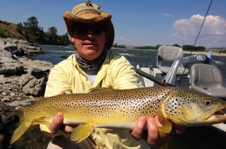 A nice Yellowstone river brown trout