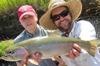 Heavy and healthy rainbow trout