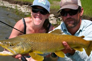 Do you want a brown trout?