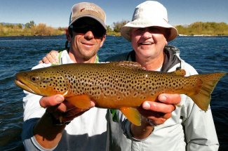 Brown trout in the Yellowstone river