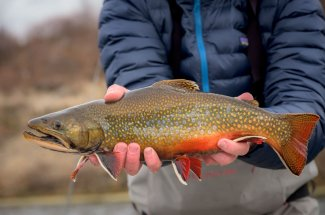 Big brook trout caught in Montana