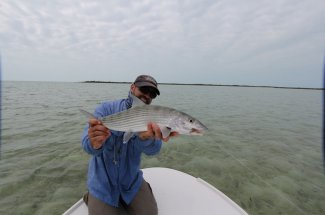 Big bonefish are numerous in the Bahamas