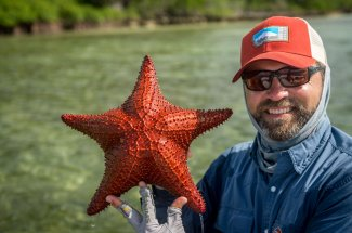 Giant starfish on the flats of the Bahamas