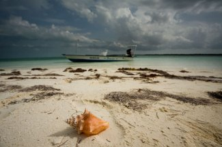 Low tide left this conch high and dry