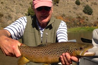 Healthy brown trout in Montana
