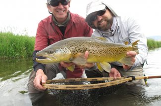 Beautiful Montana brown trout