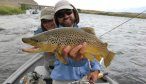 brown trout on the madison