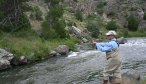 fly fishing willow creek