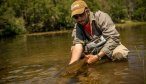 spring creek brown trout