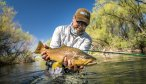 Argentina fly fishing brown trout