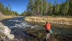 Yellowstone National Park fly fishing guides