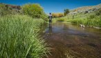 Dry fly fishing Montana
