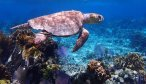 Sea turtle underwater photo