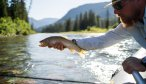 Dry Fly Fishing South Fork Flathead Cutthroat