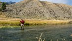 Yellowstone Park Guided Fly Fishing