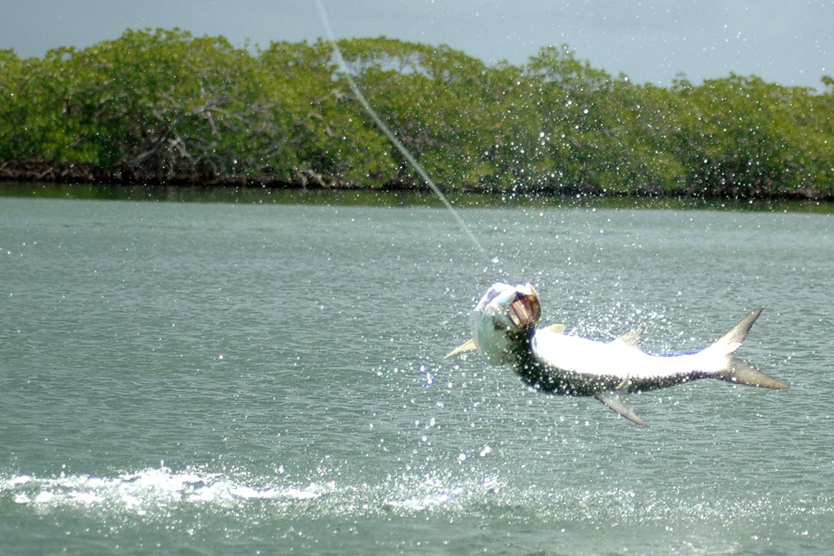 Tarpon fishing in Belize