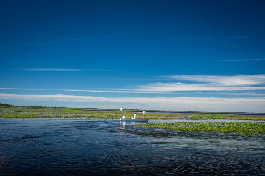 Fly fishing the Ibera Wetland of Argentina