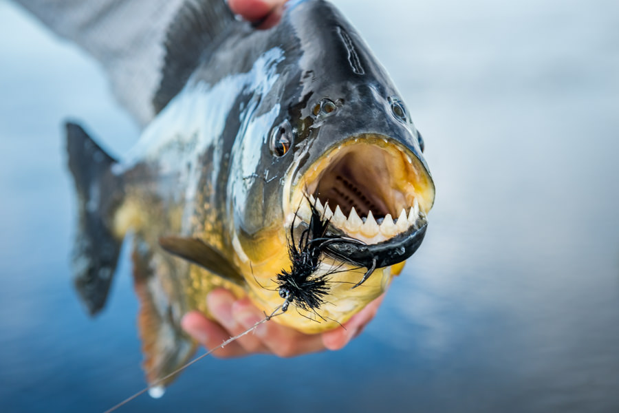 Piranha on the fly