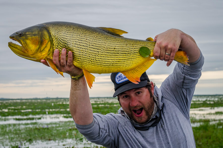 Big Golden Dorado in Argentina